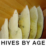 Pictures of Hives by Age